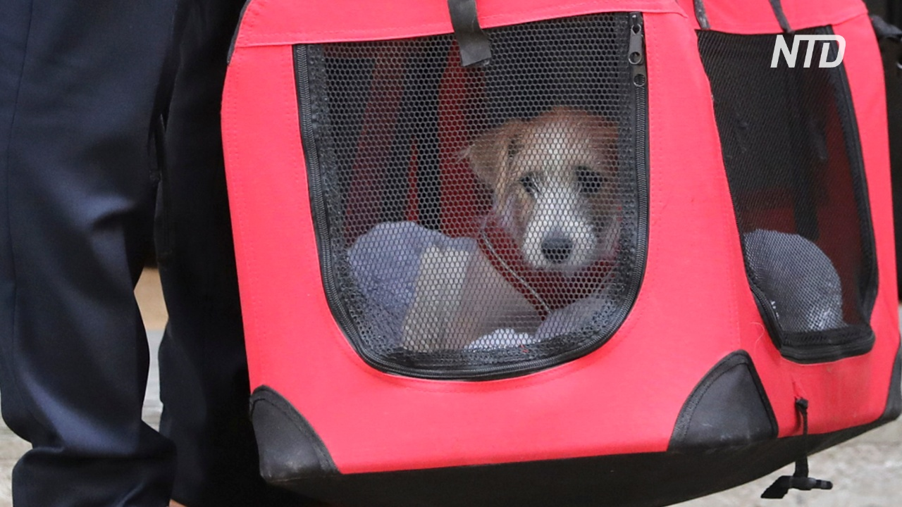 Борис Джонсон взял из приюта щенка и поселил его на Даунинг-стрит