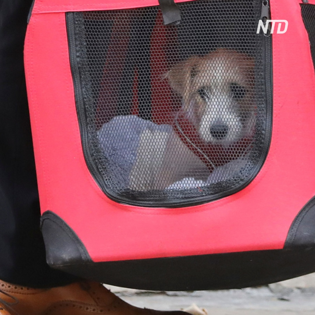 В резиденции британского премьера теперь будет жить и собака