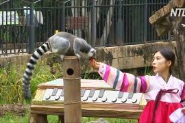 Питомцев зоопарка в Южной Корее угощают фруктами в честь праздника Чхусок
