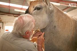 Уникальная таксидермия: житель ЮАР уже 50 лет делает чучела животных