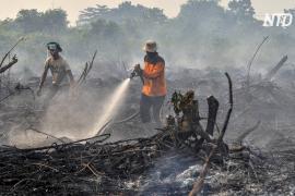 Из-за лесных пожаров в Индонезии закрывают школы