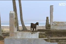 Береговая линия Кот-д'Ивуара уходит под воду
