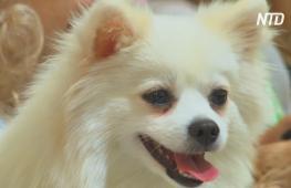 Москва: побить рекорд Гиннесса на крупнейшую фотосессию собак
