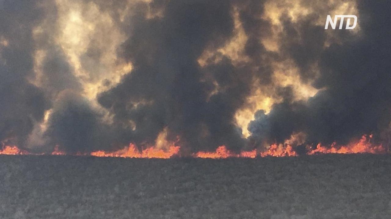 Площадь лесных пожаров в Боливии увеличилась вдвое