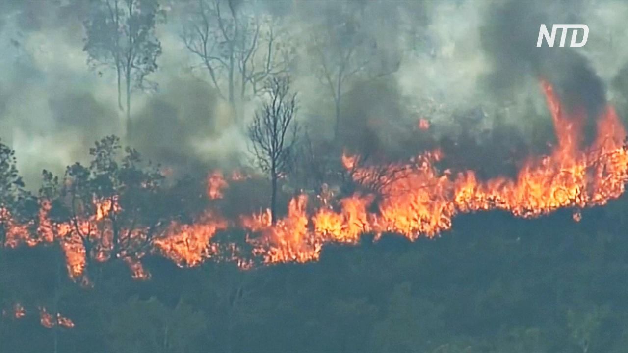 Лесные пожары в Австралии начались раньше обычного