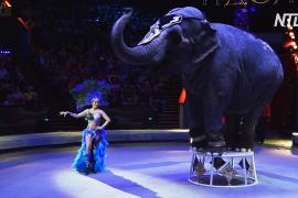 В Москве прошёл фестиваль циркового искусства «Идол»