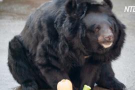 Осень в Московском зоопарке: как животные готовятся к зиме