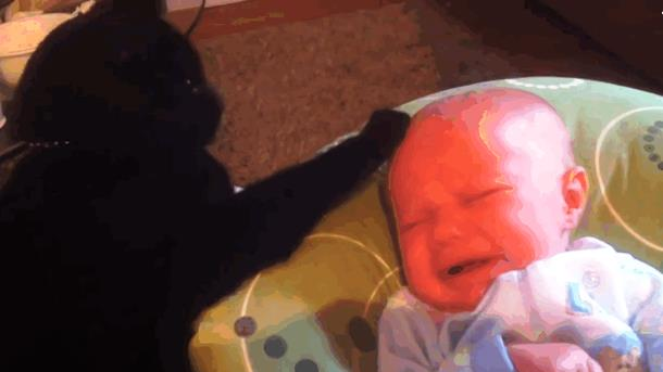 Чёрный кот одной лапой убаюкал младенца. Замечательное видео