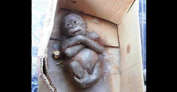 Измученный младенец-примат превратился в весёлую обезьянку