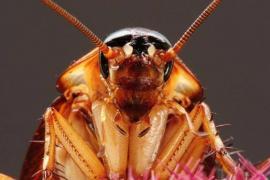 Максимальная дезинфекция: полное уничтожение тараканов в Казани