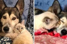 Котёнок-инвалид нашёл поддержку в объятиях собаки