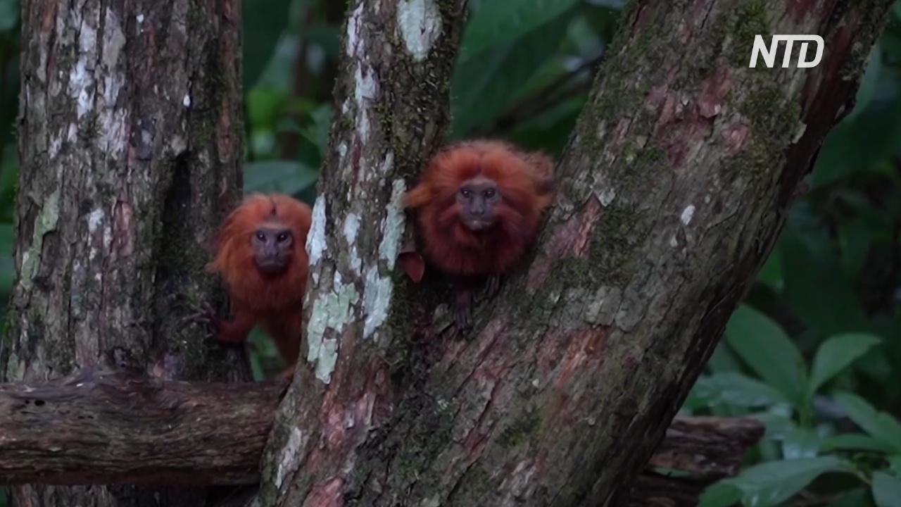 В Бразилии надеются возродить лес и спасти его обитателей