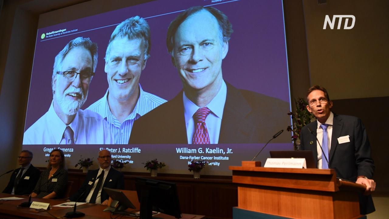 Нобелевскую премию по медицине дадут за исследование реакции клеток на уровень кислорода