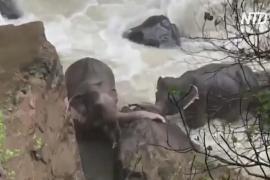 11 слонов погибли в национальном парке Таиланда, упав в водопад