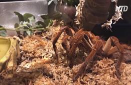 В США в преддверии Хэллоуина открылась выставка пауков