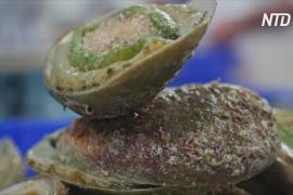 Рыбные хозяйства создают рабочие места в маленьких городках Австралии