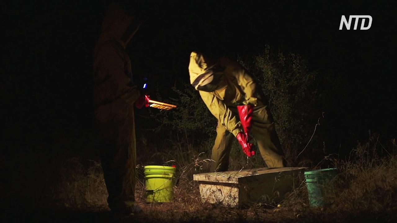 Женщины-масаи освоили пчеловодство и научились беречь природу