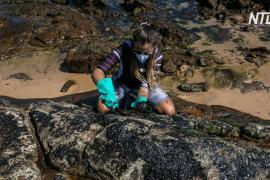 Бразилия терпит бедствие из-за загадочного разлива нефти