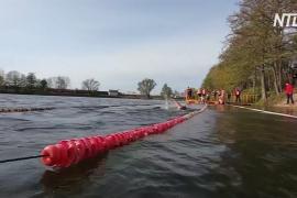 Русские и польские моржи устроили заплыв в Калининграде