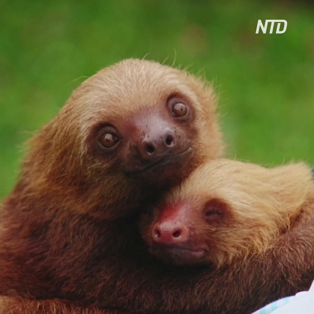 Приют для ленивцев: гамаки, еда и никакой спешки