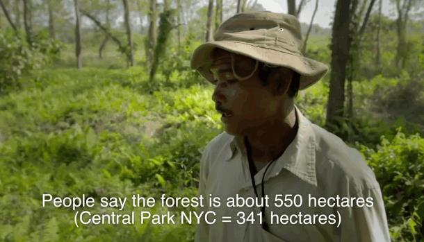 2019 10 03 143031 - Индиец в одиночку сажает лес 40 лет