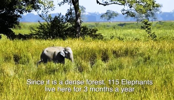 2019 10 03 143036 - Индиец в одиночку сажает лес 40 лет