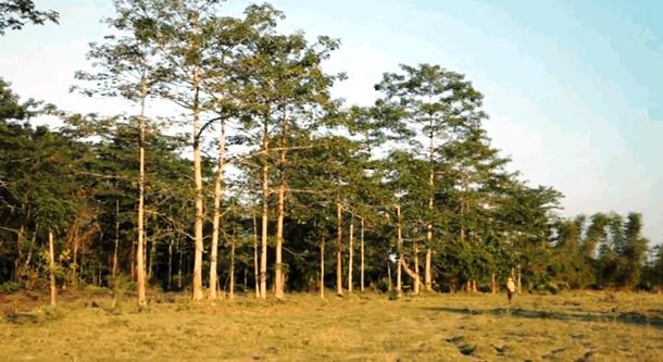 2019 10 03 143112 - Индиец в одиночку сажает лес 40 лет