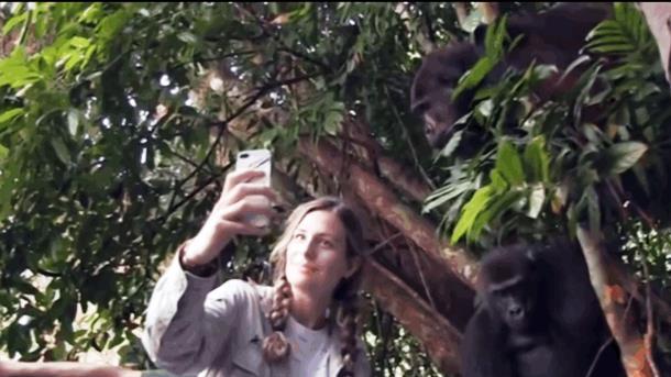 Девочка выросла с парой горилл. Спустя 12 лет они встретились