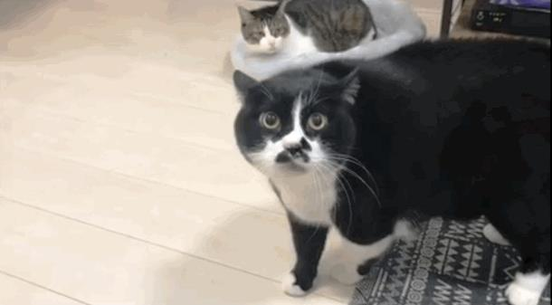 Всегда ли кошки мяукают, а собаки лают? Забавные видео