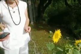 Женщина записала «голос» подсолнуха