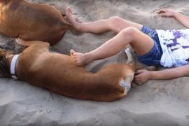 Как собака отомстила девочке за шалость. Смешное видео