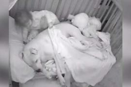 Малышка укладывает спать собаку. Трогательное видео