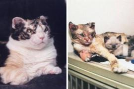 Кошка спасла из огня свою семью и прославилась на весь мир