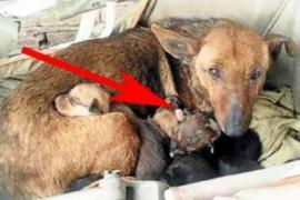 Женщина среди щенков обнаружила младенца