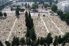 Приложение помогает ориентироваться на огромных кладбищах в Израиле