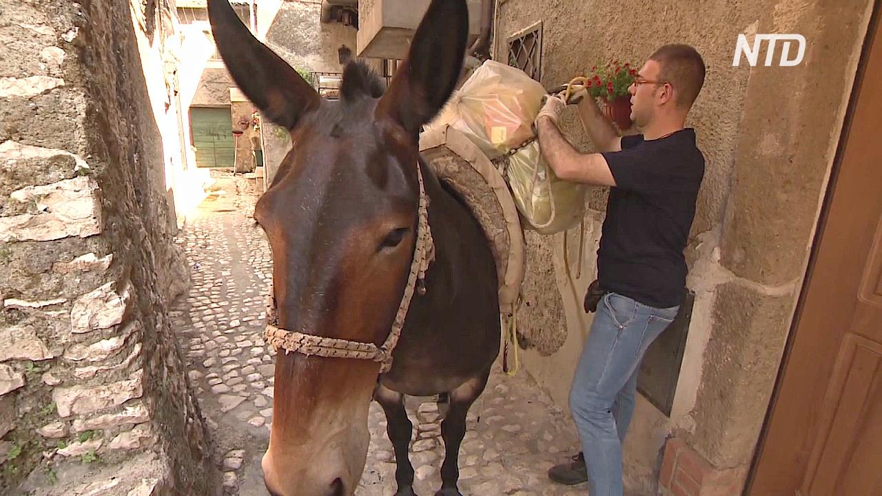 В итальянском городке мусор вывозят мулы