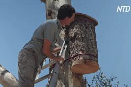 Миссия «Возрождение»: калифорниец спасает медоносных пчел