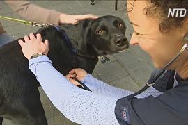 В Австралии ветеринары бесплатно лечат питомцев бездомных