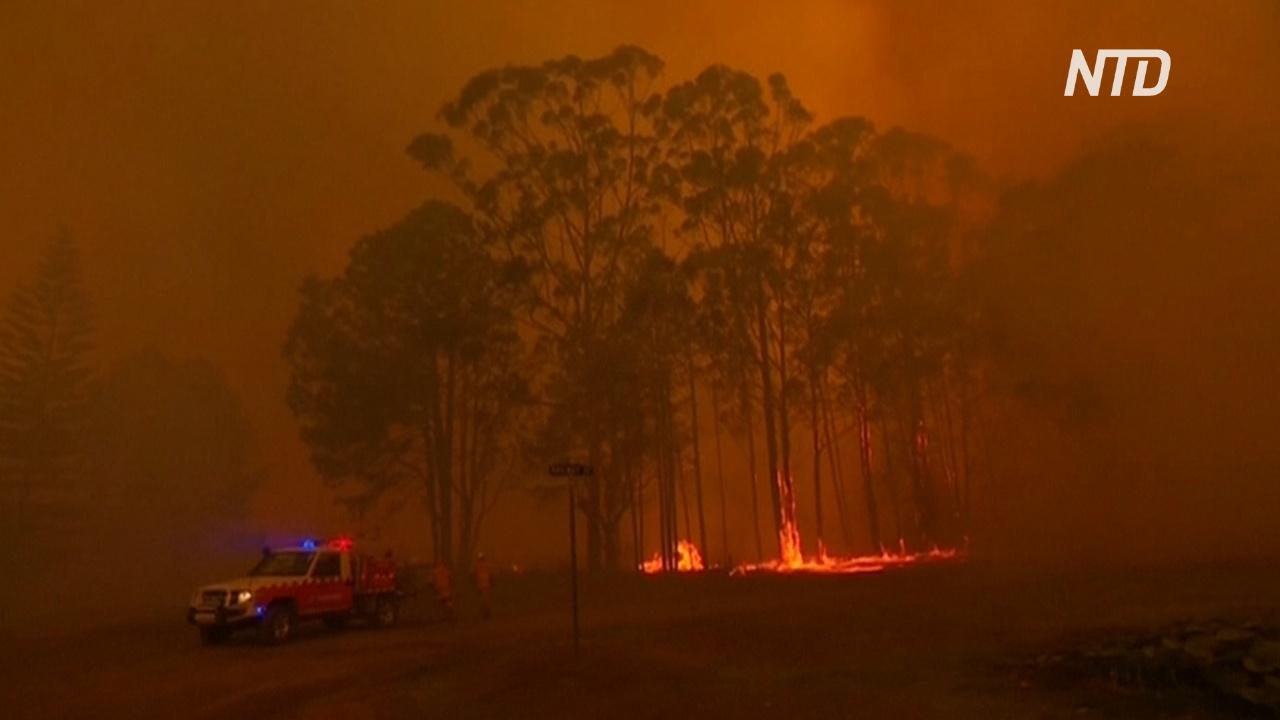В двух штатах Австралии ввели режим ЧП из-за пожаров