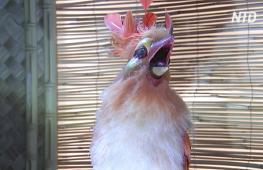 Статуя Микки-Мауса и аниматронные птицы: «Диснейленд» продаст редкие предметы