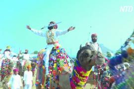Верблюды, танцы и конкурсы: знаменитая верблюжья ярмарка в Индии