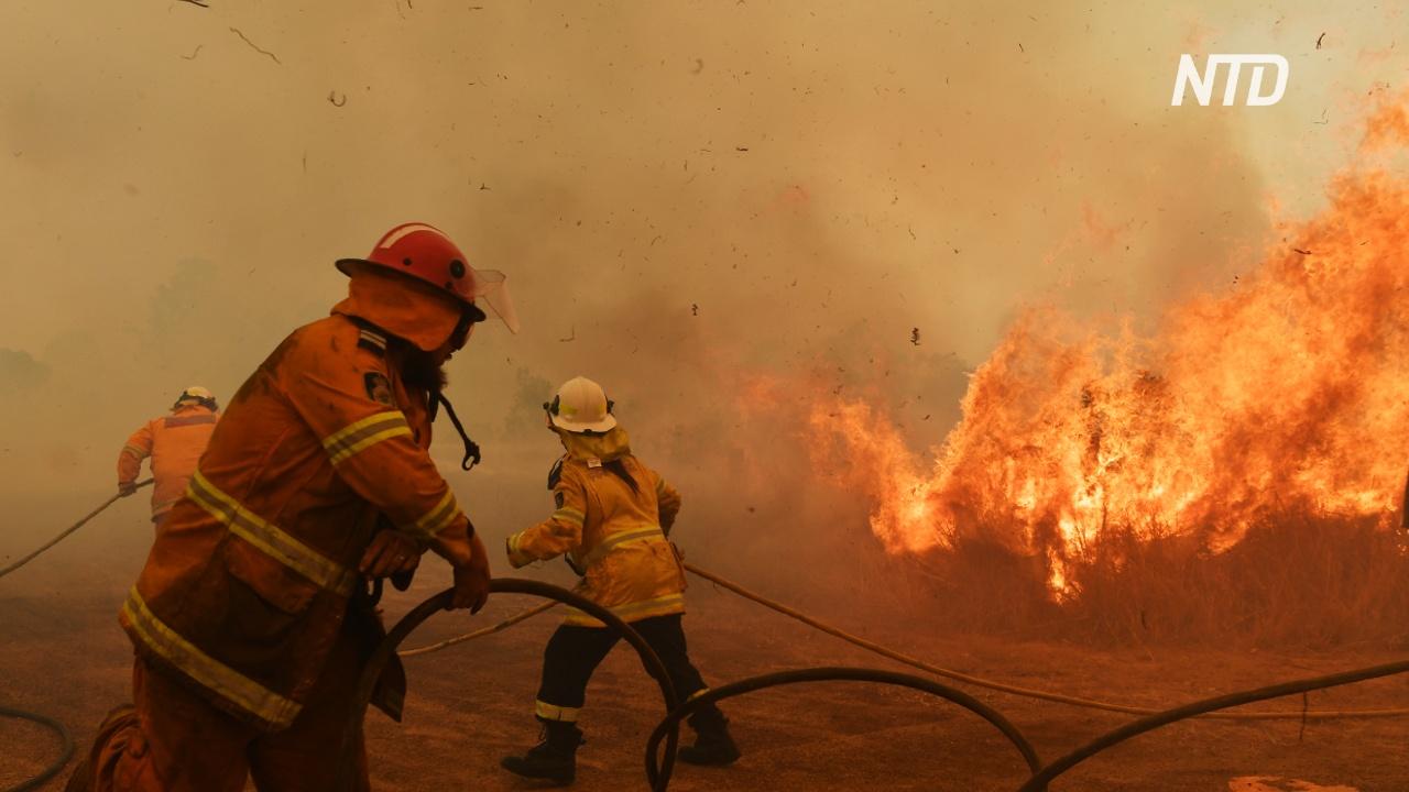 Пожары в Австралии помогает тушить беременная пожарная