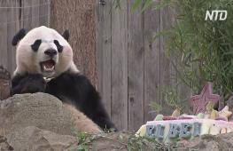 В зоопарке Вашингтона устроили торжественные проводы панде Бэй Бэю