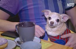 Собачье кафе в Перми процветает само и помогает бездомным питомцам