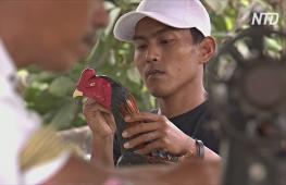 Индонезийцы превращают отходы в красивые фигурки петухов