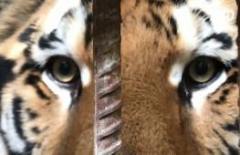 Сириец сделал для себя зоопарк и играет со львами