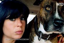 Во Франции собаки загрызли беременную женщину