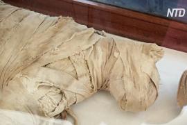 Мумии кошек и крокодилов: в Египте нашли древний тайник