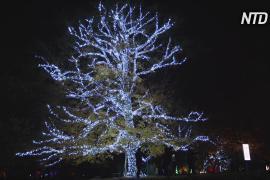Завораживающая сказка из света озарила ботанический сад в Лондоне