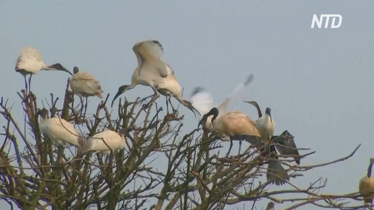 В индийский заповедник слетелись на зимовку 200 видов птиц